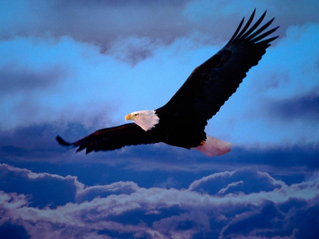 راز افسون پرواز را از عقاب بپرس!