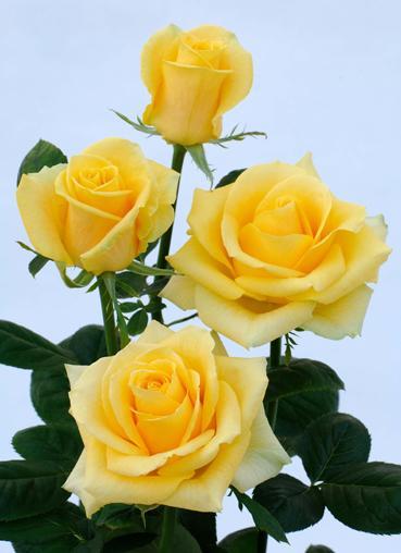 کدام گل برای کدام مادر مناسب است؟