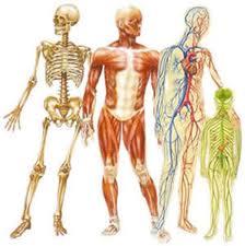 علائم رمزی بدن